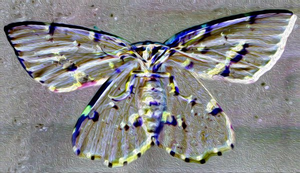 A Moth on Glass thumbnail