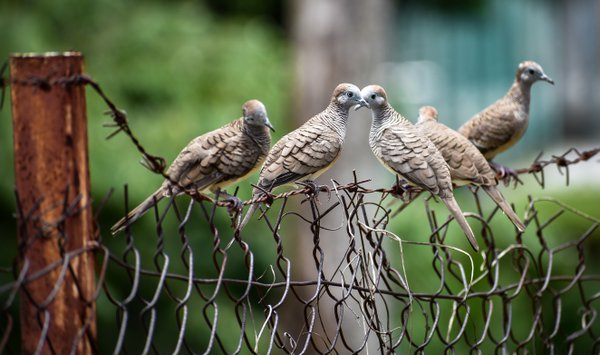 Birds In Symmetry thumbnail