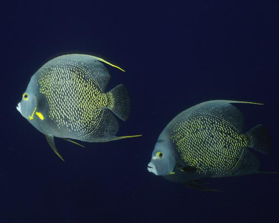 Is It Love? Why Some Ocean Animals (Sort Of) Mate For Life