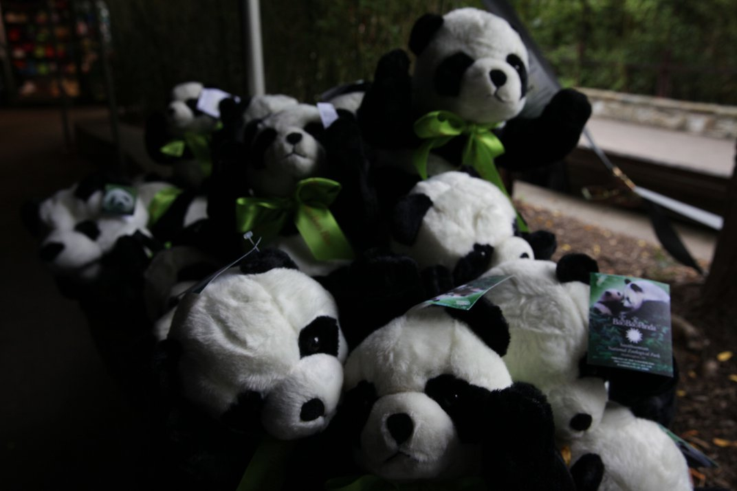 How Does Bao Bao Celebrate Her Birthday? With Cake, Bamboo and Hundreds of Fans