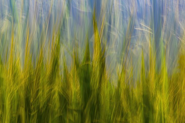 An Iowa cornfield captured with intentional camera movement thumbnail
