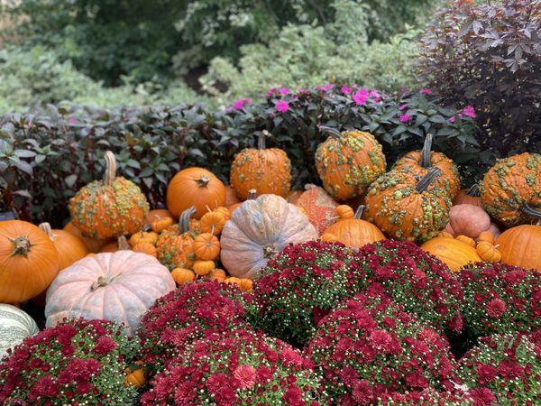 It's Fall Ya'll thumbnail