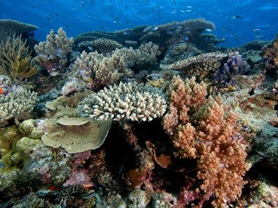 The health of corals on the Great Barrier Reef is routinely being threatened by hot water temperatures. The Australian government is investigating a range of techniques to try to protect the corals and stave off warming.