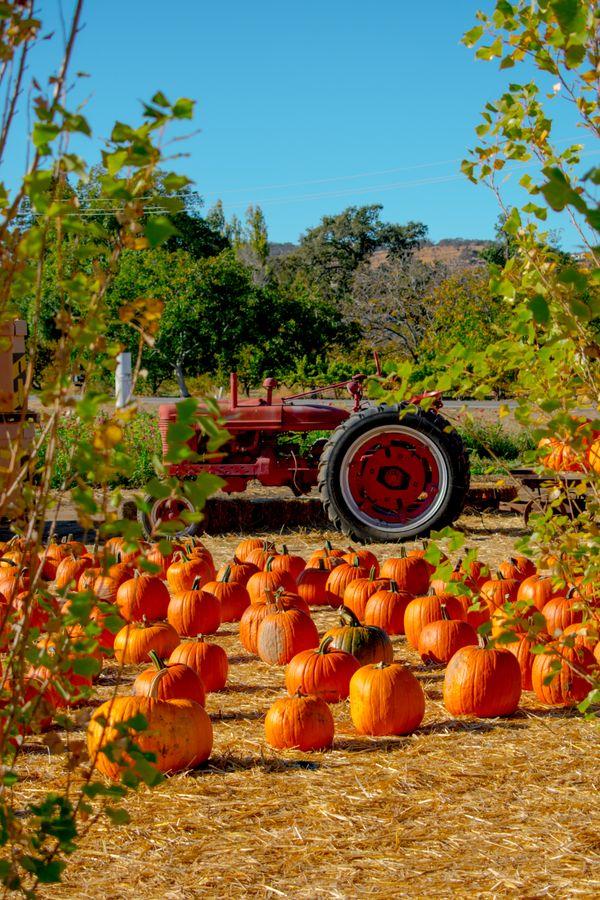 Pumpkin Patch thumbnail