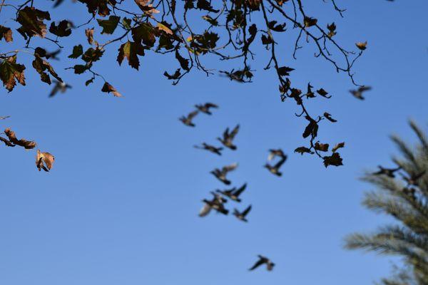 Falling leaves thumbnail