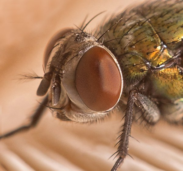 The Eye of the Fly thumbnail