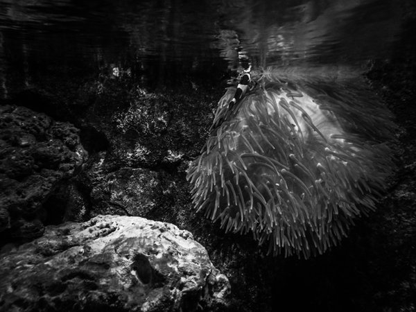 Underwater life 《水底的生命》 thumbnail