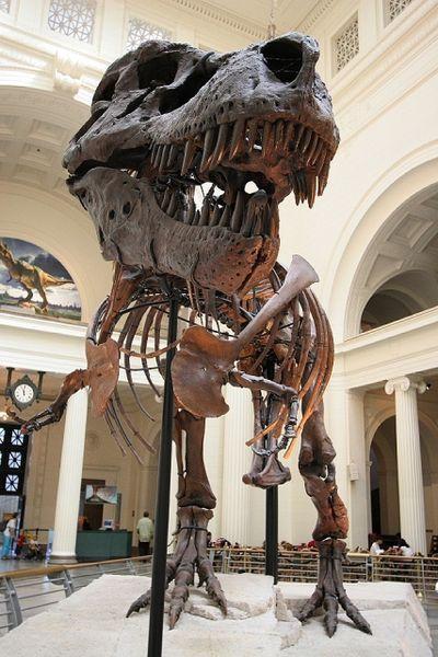 20110520083320Sue-Field-Museum.jpg