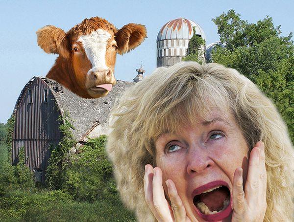 Cow Causes Chaos thumbnail