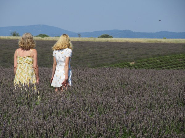 Exploring Lavender Fields in Provence thumbnail