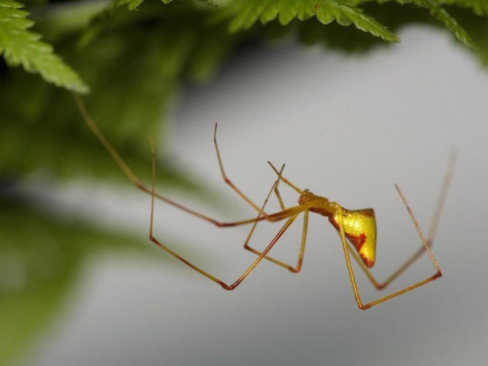 Stick spider.jpg