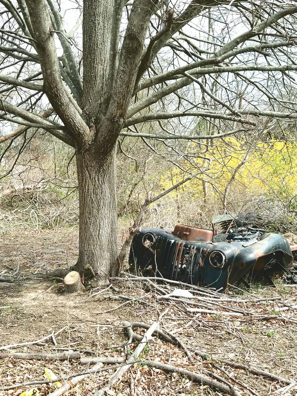 Random Old vehicle in the woods thumbnail
