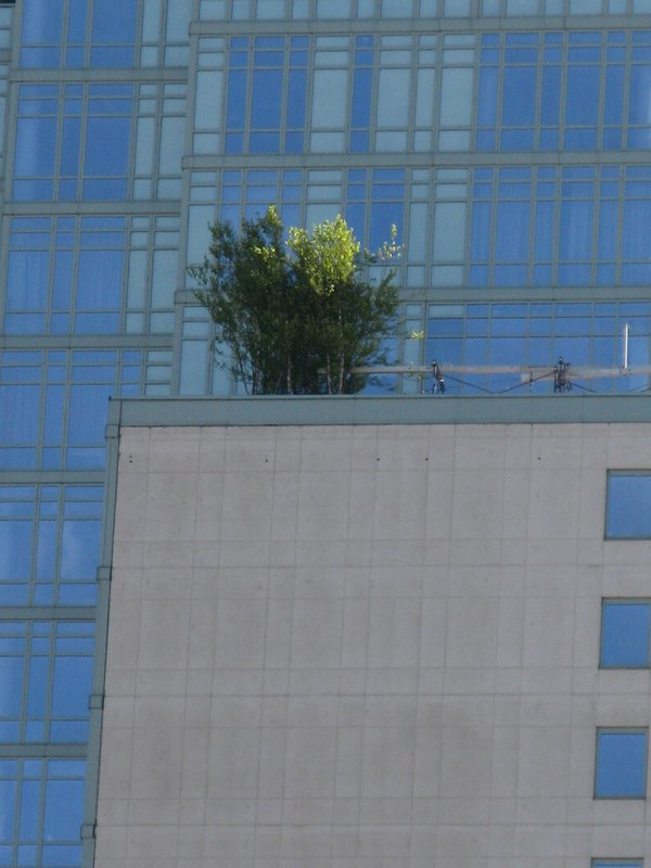Graphic New York building meets nature thumbnail
