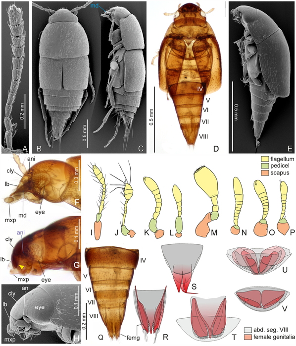 Fossil Mix-Up Could Rewrite the History of Beetles, the Largest Group of Animals on Earth