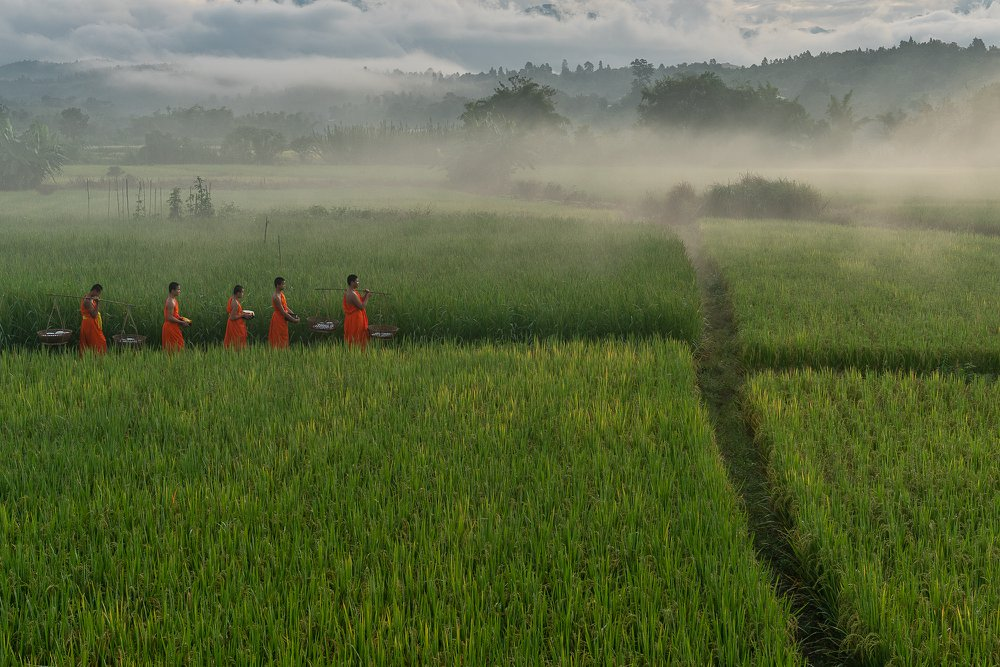 During my trip to the northern part of Thailand, I visited a village called Mae Chaem, situated in Chiang Mai province. This village is surrounded by mountains and rice fields. In the early morning, I went out to the rice fields, and I happened to witness a group of novices on their early morning alms-gathering walk pass through the rice field back to the temple.