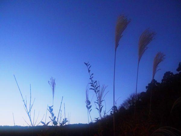 November Maiden Silvergrass Stillness on phantom Isle thumbnail