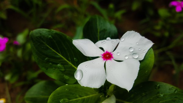 Flower and Purity  thumbnail