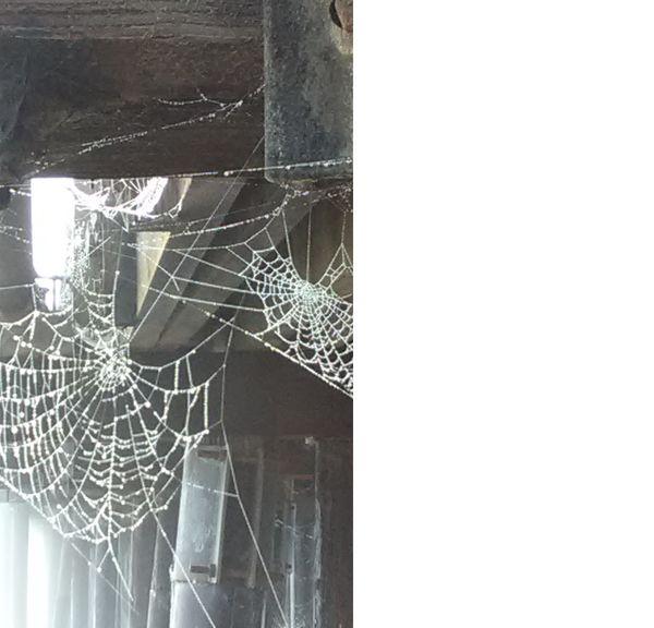SPIDER WEBS  thumbnail
