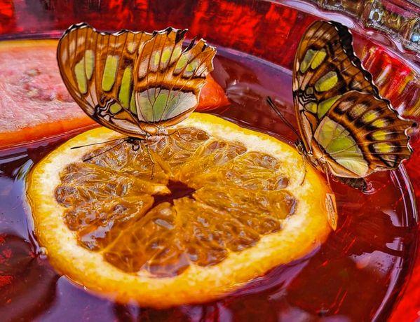 Drinking Butterflies thumbnail