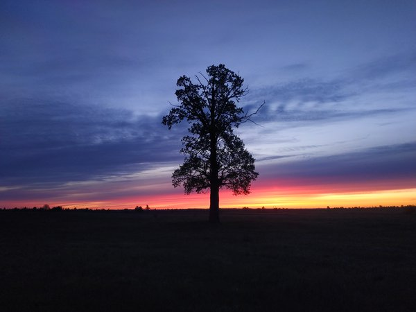 Lonely oak thumbnail