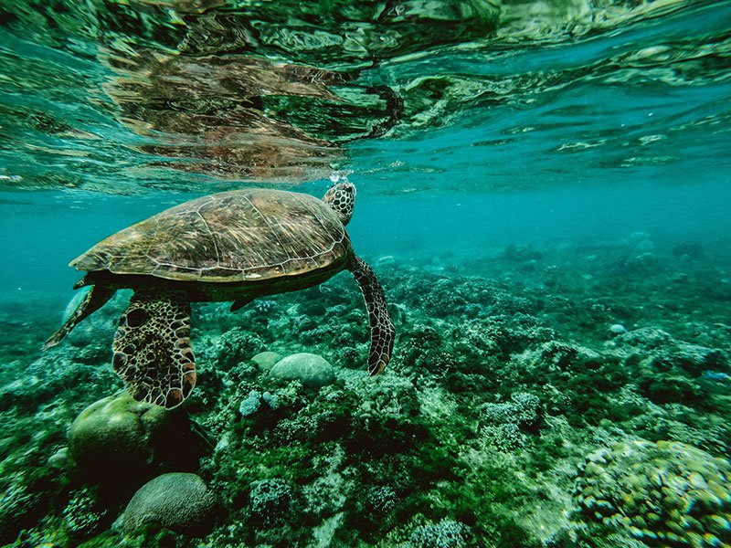 Why the Ocean Needs Wilderness
