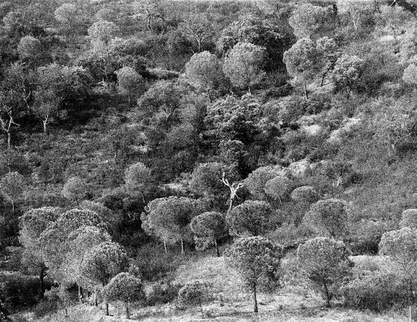 Trees from Portugal thumbnail