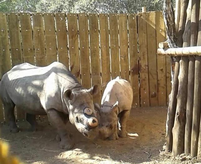 rhino-baby.jpg