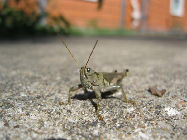 Mr. Grasshopper thumbnail