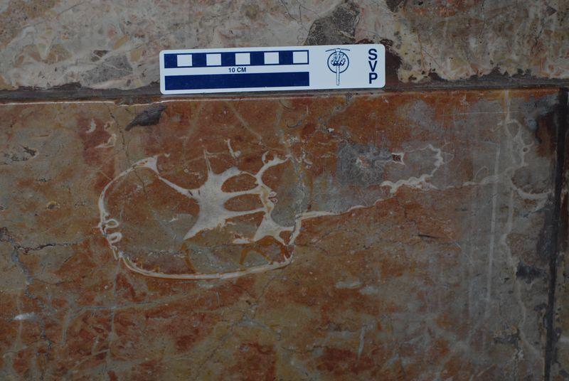 20110520083247dinosaur-skull-ammonite.jpg