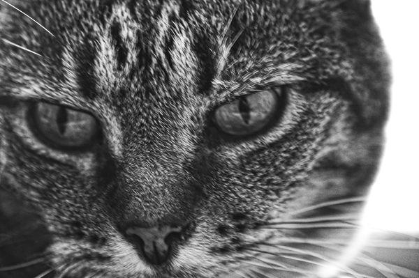 Feline in Contemplation thumbnail