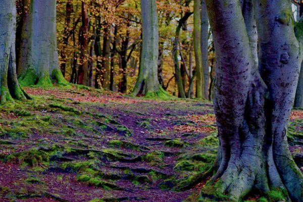 Autumn Fairy Forest thumbnail