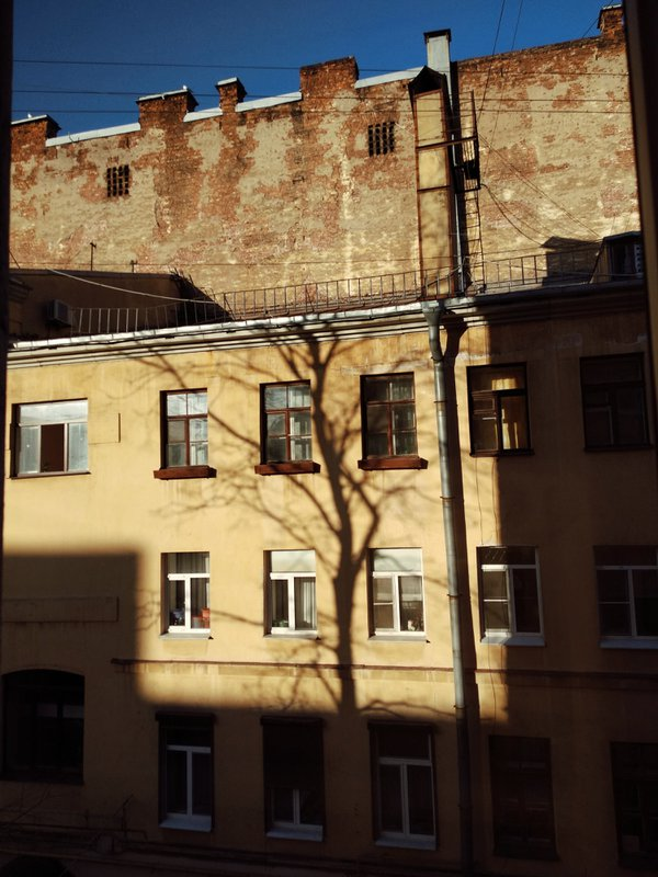 Tree shadow thumbnail