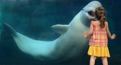 girl-with-baluga-whale-388.jpg