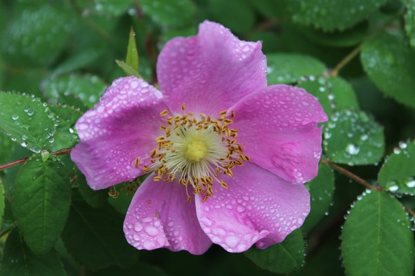 A blooming flower in the rain forest in Alaska thumbnail