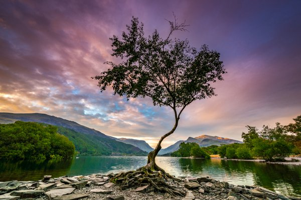 The Lone Tree thumbnail