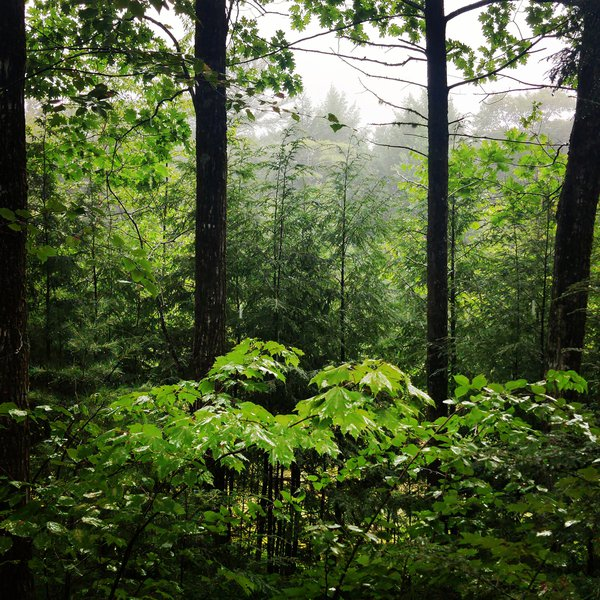 View on a rainy day from the cabin thumbnail