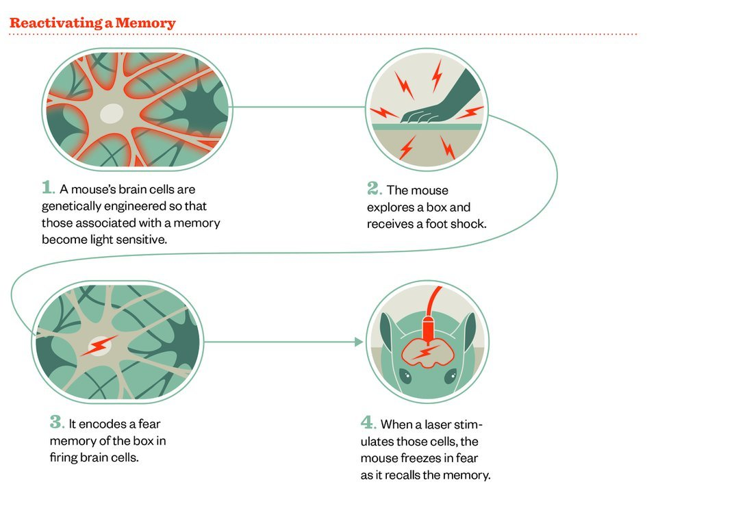 Meet the Two Scientists Who Implanted a False Memory Into a Mouse