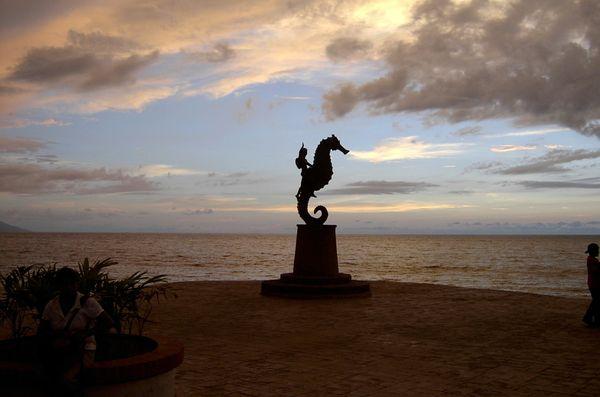 Seahorse at sunset in Puerto Vallarta thumbnail
