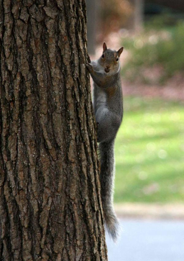 Squirrels got a nut. thumbnail