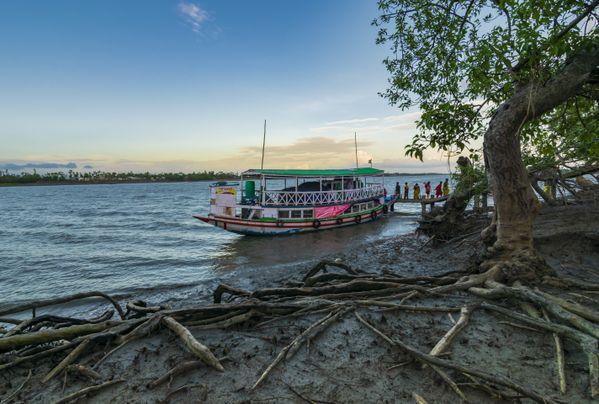Life of Mangrove thumbnail