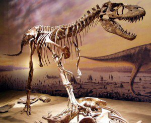 20110520083207Albertosaurus-skeleton-300x246.jpg