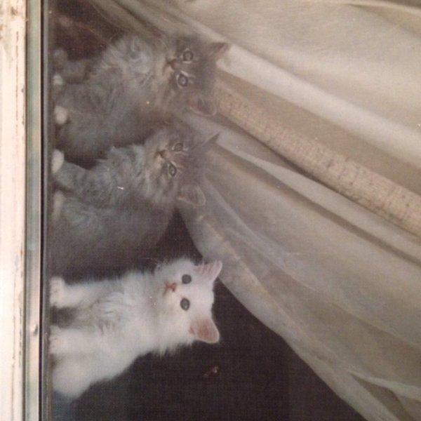 kittens in window thumbnail