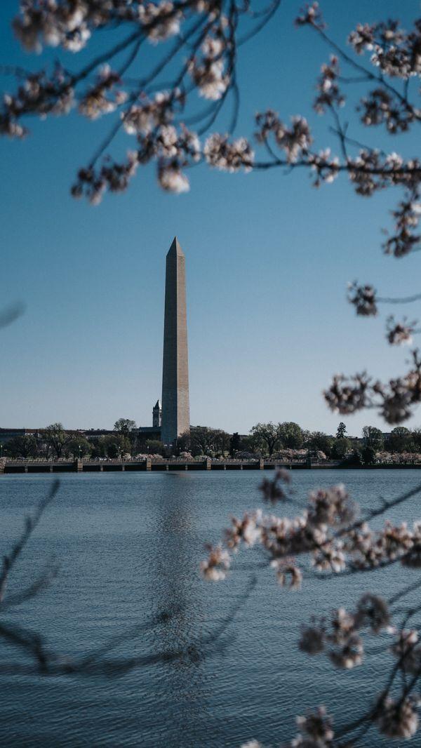 Washington Monument Under Cherry Blossoms thumbnail