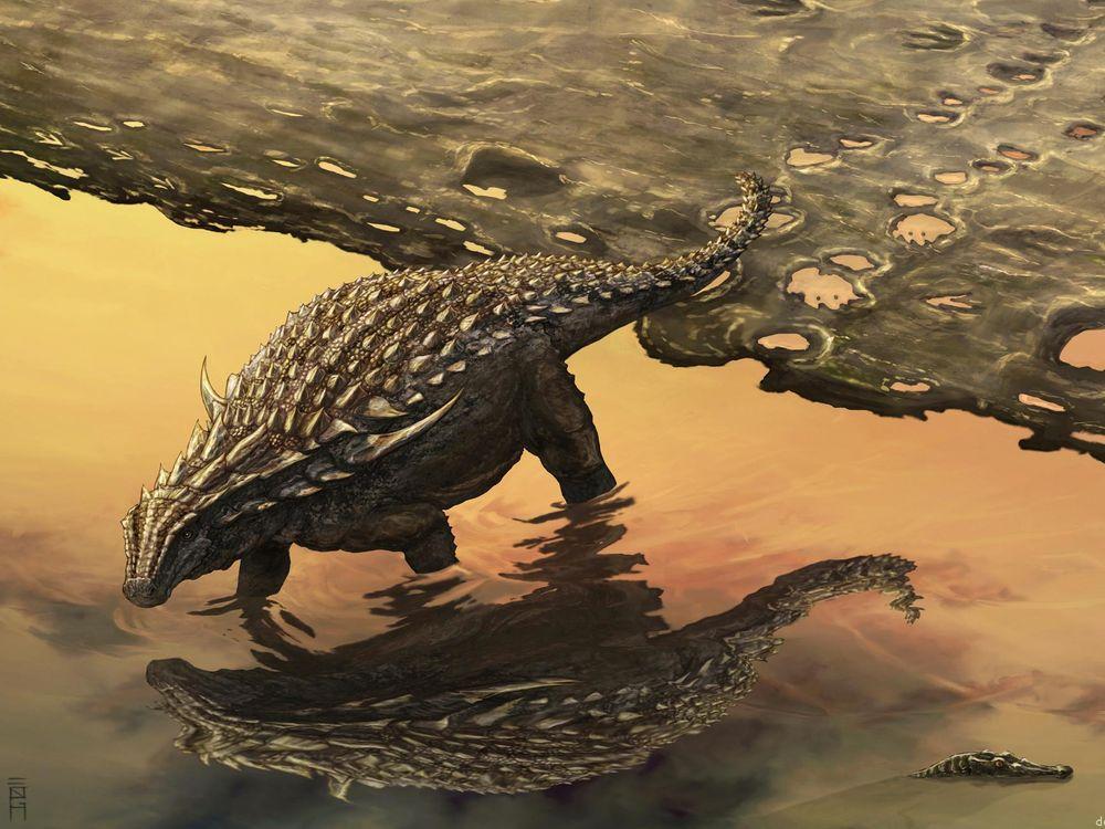 The footprints of ankylosaurs