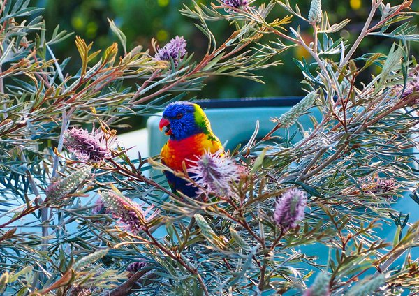 A flowery frame for a rainbow bird thumbnail