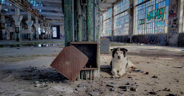 Jake the dog exploring abandoned factory  thumbnail