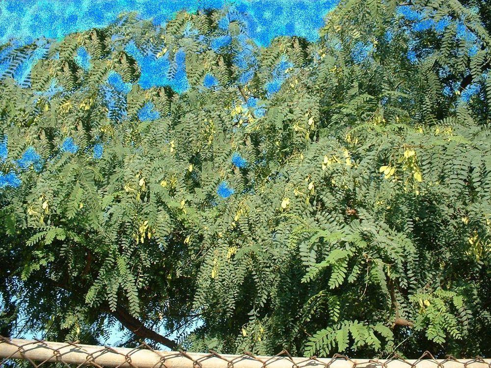 Microsoft Paint Tree