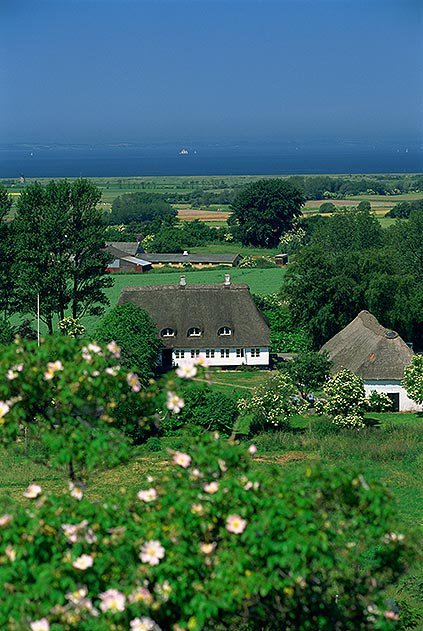 Thatched cottages Aero Denmark