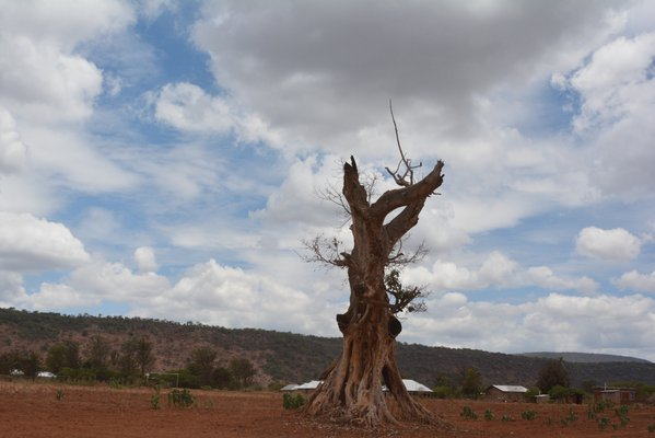 Gnarled Tree thumbnail