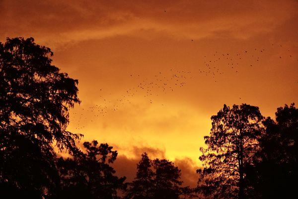 Flock of birds and sunset inside the eye of Hurricane Zeta in New Orleans thumbnail